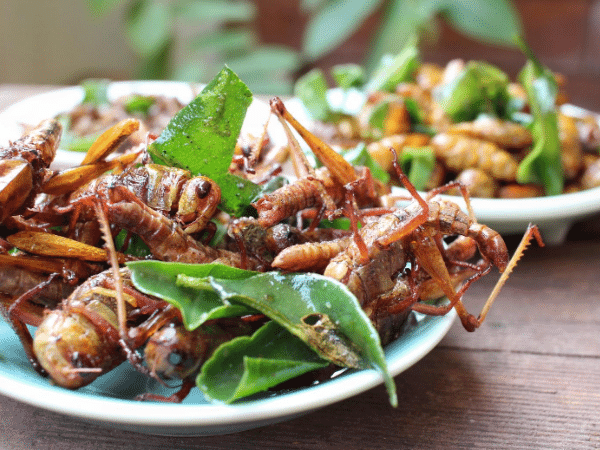 cooking insects