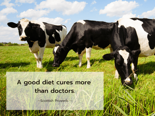 Cows grazing, Scottish Proverb - A good diet cures more than doctors.