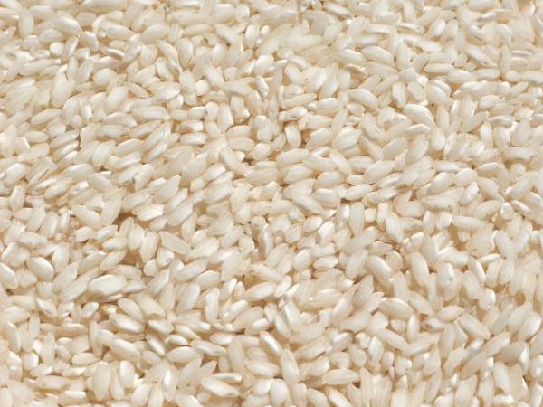 medium grain rice