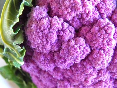 Purple cauliflower rich in anthocyanin